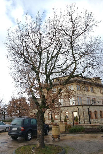 難得住到Siena的莊園旅館,周圍滿是葡萄園