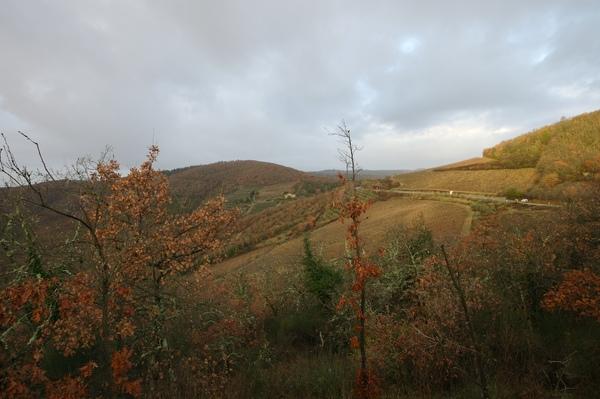金黃的丘陵