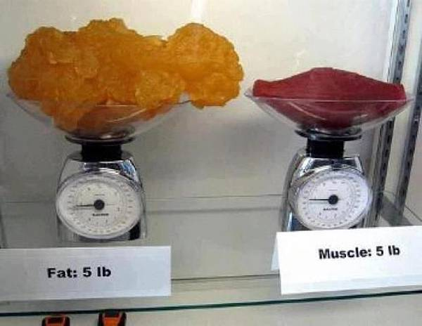 fat_5lb