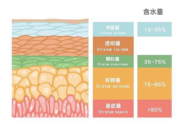 皮膚含水分層.jpg