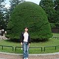 修道院裡面有很多布丁樹