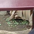烏龜的腳好像苦瓜