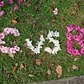 在草地上用花排字