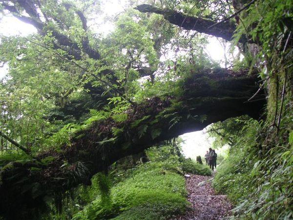 爬過崩坍山壁後,又有茂密的森林步道