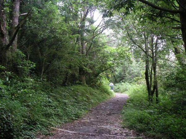 這樣的森林步道走起來很舒服,只可惜爛泥巴太多了