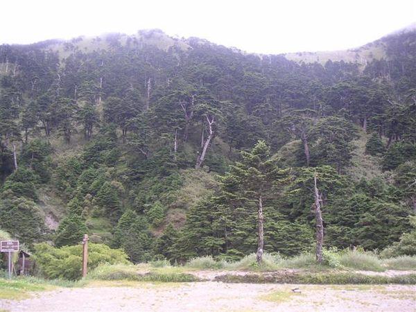 山莊就可以看到整片神木區