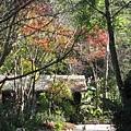 南庄是一個很寧靜的景點,沒什麼人,而且居然有這麼美的楓葉!