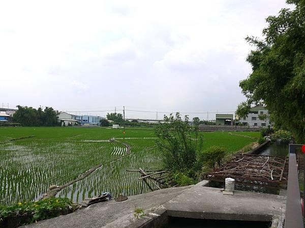知高圳 09.JPG