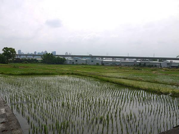 知高圳 16.JPG