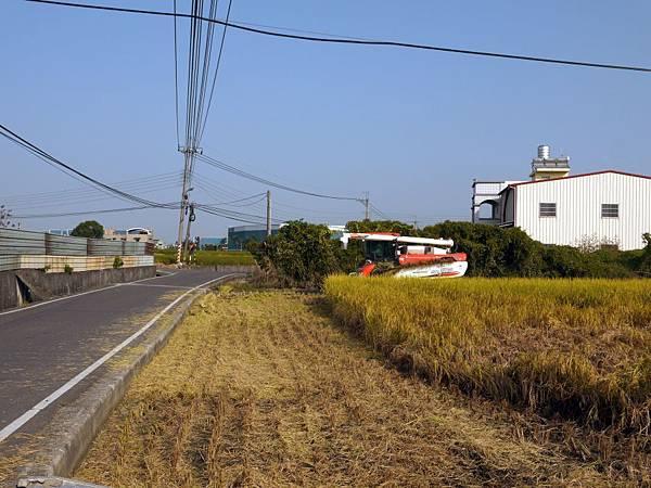 稻田軼事 收割19.JPG