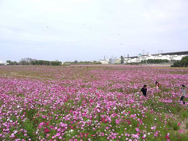 稻田軼事 養肥09.JPG