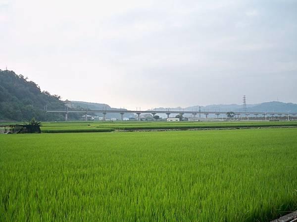 台13義里大橋舊線 14.JPG