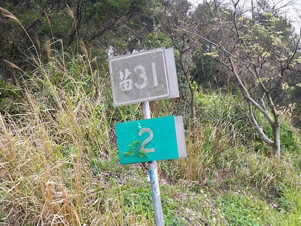 苗31 77.JPG