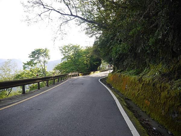台14甲 翠峰以東 (24).JPG