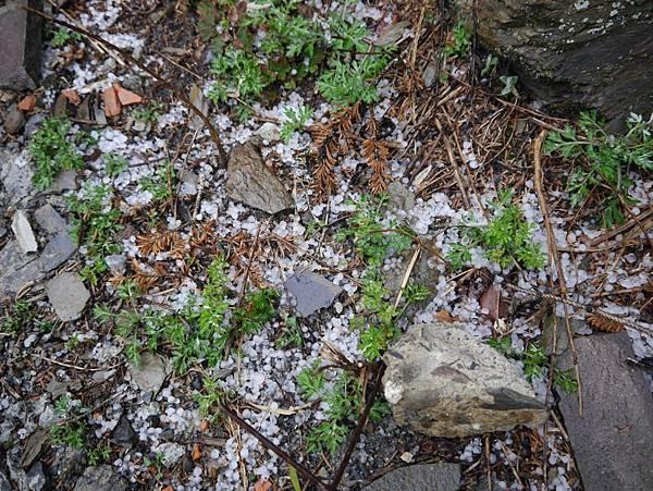 冰雹 (16).JPG