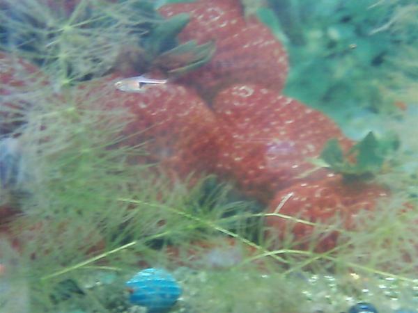 水草草莓屋
