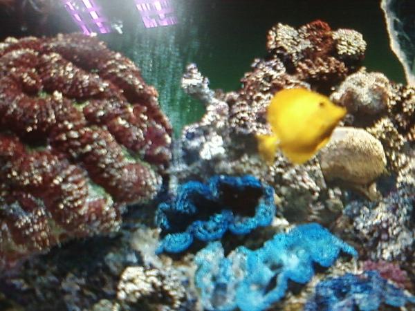 黃色熱帶魚