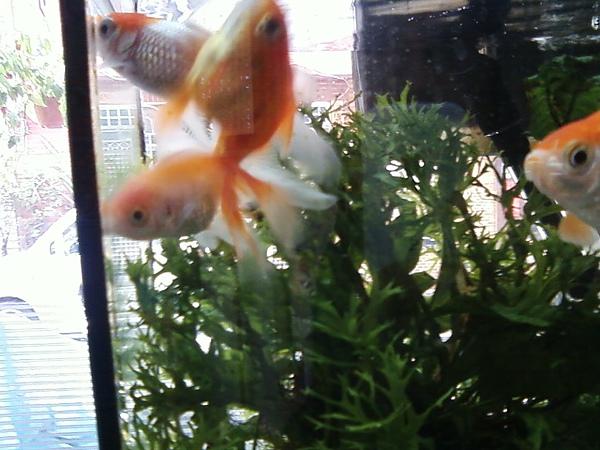 尋寶金魚三劍客