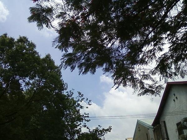 樹下看雲飛.jpg