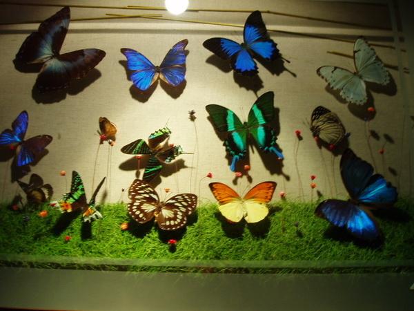 高雄工藝博物館-蝴蝶