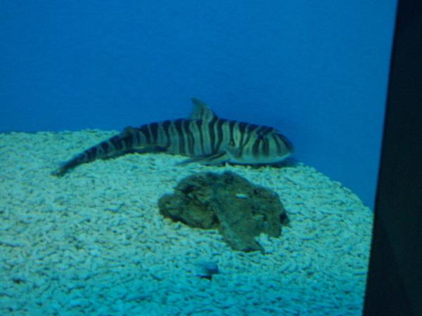 海洋館-龍魚