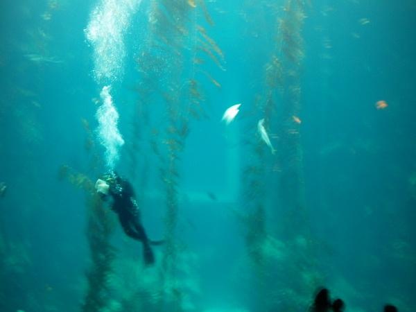海洋館-清潔玻璃人員