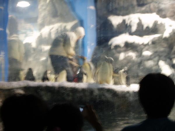 海洋館-企鵝(Q)