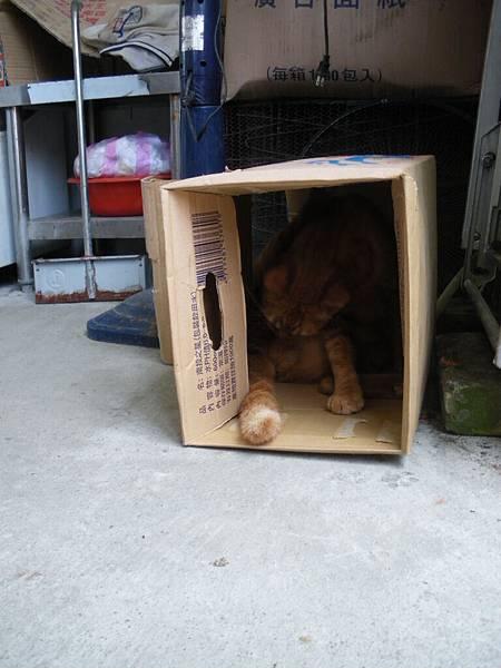 2011-6-5 下午 12-38-26_0103.JPG