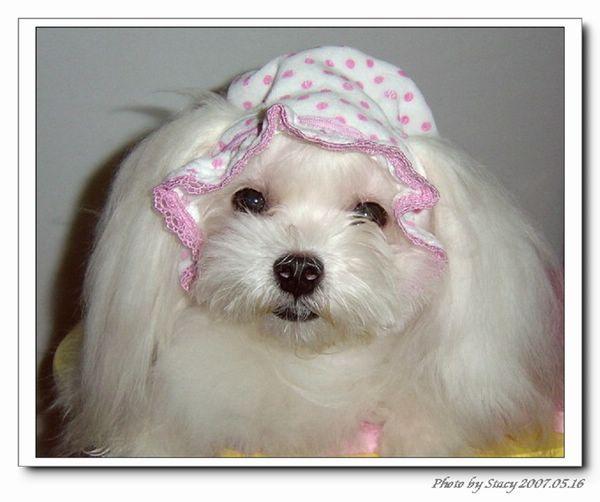 小瑪戴BABY帽(臭臉)