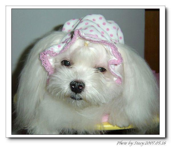 小瑪戴BABY帽