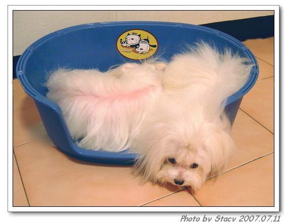 二犬擠一床