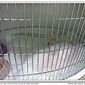 熟悉的籠子和IV PUMP 當初小瑪也是住這間,整個心都揪了