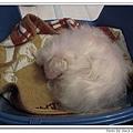 2009.03.04 熟睡的danny