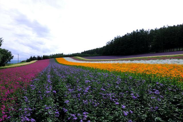 北海道~花