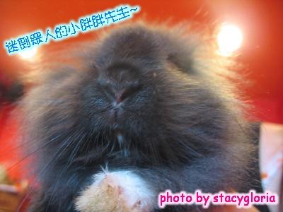 971115˙兔寶生日會+小組聚會1