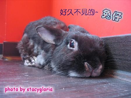 971115˙兔寶生日會+小組聚會6