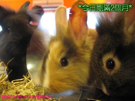 971115˙兔寶生日會+小組聚會7