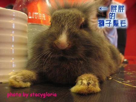 971115˙兔寶生日會+小組聚會11