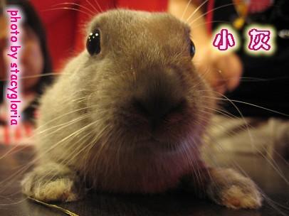 971115˙兔寶生日會+小組聚會12