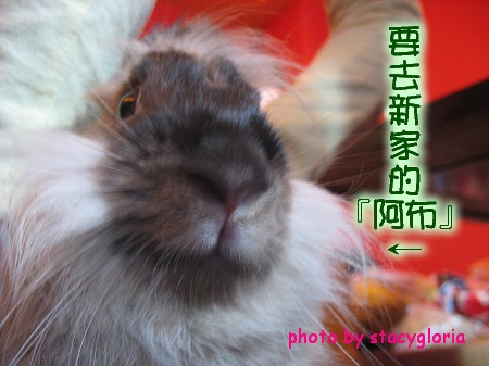 971115˙兔寶生日會+小組聚會14