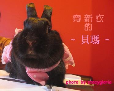 971115˙兔寶生日會+小組聚會15