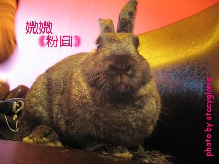 971115˙兔寶生日會+小組聚會16