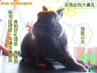 公關兔˙小天哥