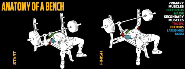 anatomy-of-a-bench