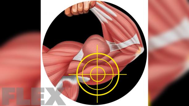 triceps_0