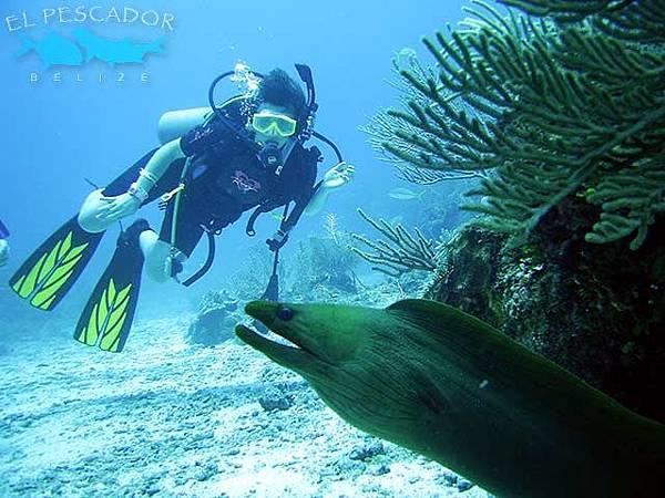 diver_moray_eel640x480