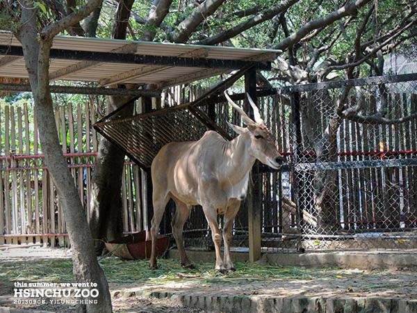 新竹動物園7