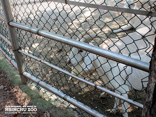 新竹動物園8
