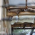 新竹動物園10