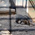 新竹動物園9